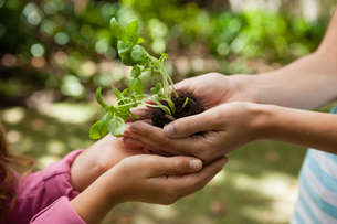 Cropped cupped hands of mother giving seedling to girlの写真素材 [FYI02236886]