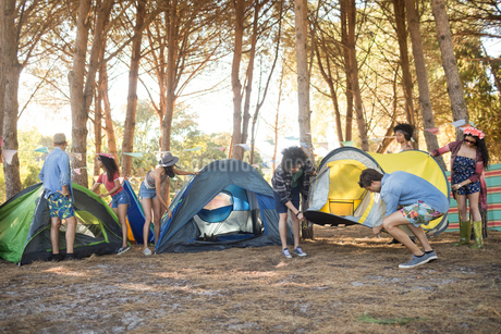 Young friends setting up their tents together on fieldの写真素材 [FYI02237300]