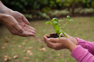 Cropped cupped hands of mother with girl holding seedlingの写真素材 [FYI02237607]