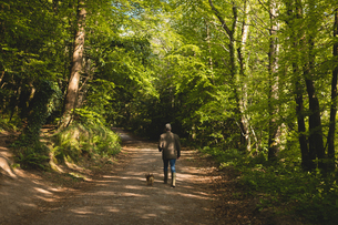 Rear view of man walking with dog in forestの写真素材 [FYI02238225]