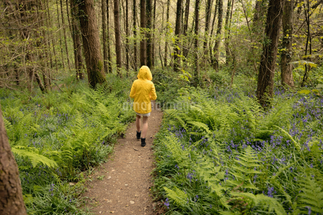 Rear view of woman walking in forestの写真素材 [FYI02238650]