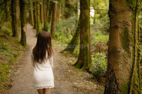Rear view of woman walking in forestの写真素材 [FYI02238838]