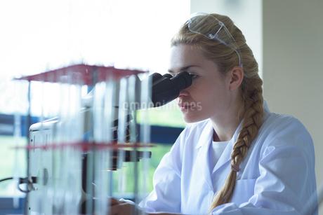 University student doing experiment on microscope in laboratoryの写真素材 [FYI02239003]