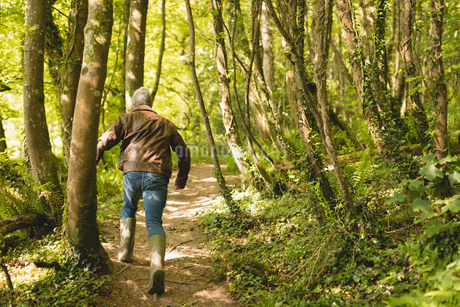 Rear view of man running in forestの写真素材 [FYI02239043]