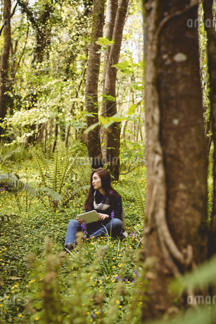 Woman using digital tablet in forest on a sunny dayの写真素材 [FYI02239093]