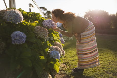 Side view of woman smelling flowersの写真素材 [FYI02239377]