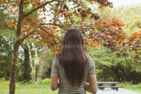 Rear view of woman standing in forestの写真素材 [FYI02239530]