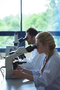 University students doing experiment on microscope in laboratoryの写真素材 [FYI02239705]