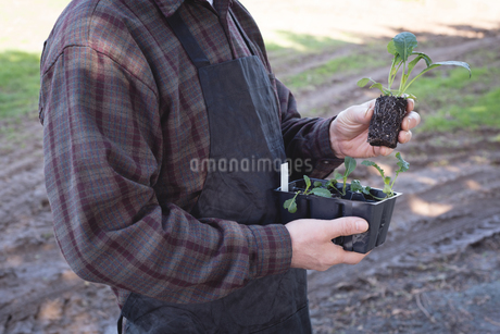 Mid-section of man holding a plantの写真素材 [FYI02239897]