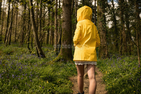 Rear view of woman walking in forestの写真素材 [FYI02239985]