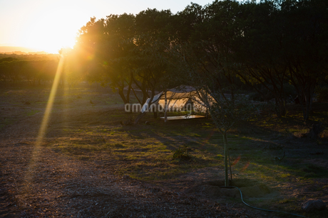 Tent amidst trees on fieldの写真素材 [FYI02240046]