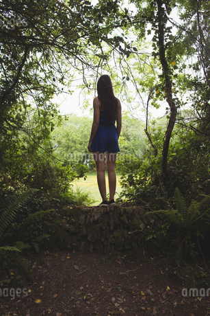 Rear view of woman standing in forestの写真素材 [FYI02240133]