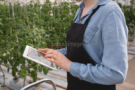 Mid-section of woman using digital tabletの写真素材 [FYI02240175]