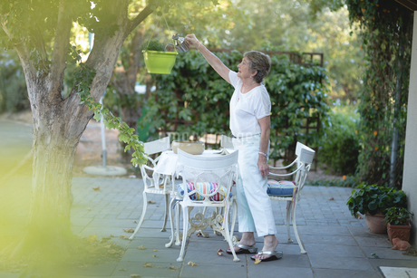 Senior woman watering the plant outdoorsの写真素材 [FYI02240519]