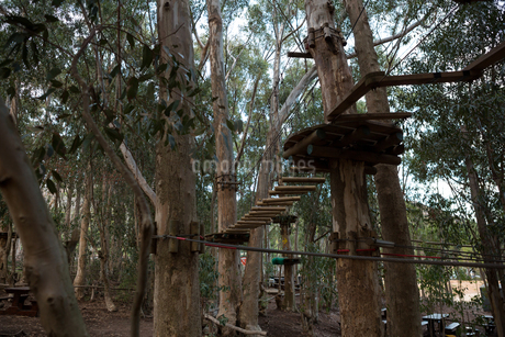 A view of wooden obstacles in the forestの写真素材 [FYI02240962]
