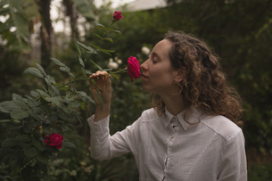 Woman smelling red rose in the gardenの写真素材 [FYI02241847]