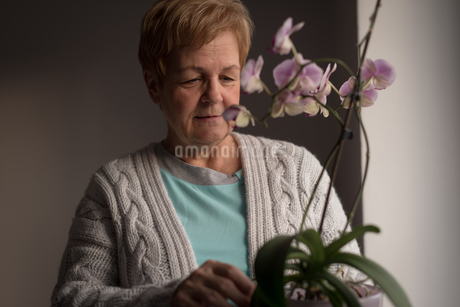 Senior woman looking at a plantの写真素材 [FYI02243177]