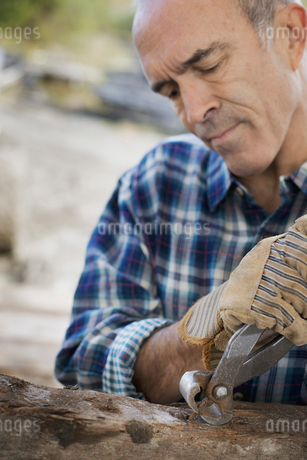 A man preparing the timber removing nails and studs.の写真素材 [FYI02243458]