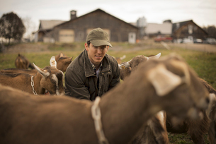 Farmer working and tending to the animals on an organic farmの写真素材 [FYI02244310]