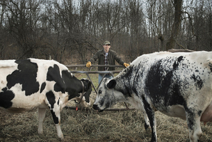 Farmer working and tending to the animals on an organic farmの写真素材 [FYI02244330]