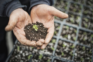 A person with a handful of soil and a healthy new seedling.の写真素材 [FYI02244355]