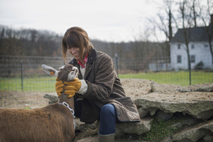 Farmer working and tending to the animals on an organic farmの写真素材 [FYI02244432]