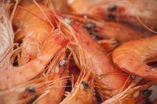 A dish of freshly cooked prawns with shells. Seafood.の写真素材 [FYI02244438]