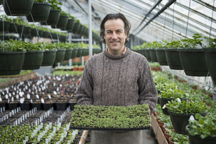 A man holding a tray of healthy green seedlings.の写真素材 [FYI02244725]
