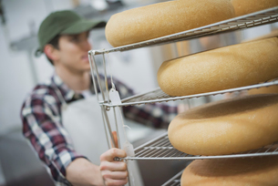 Dairy with large wheels of goats cheese maturing.の写真素材 [FYI02245160]