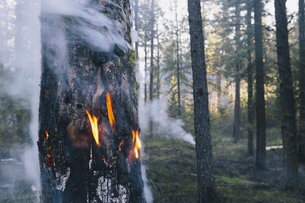 A controlled forest burn, a deliberate fire.の写真素材 [FYI02245504]