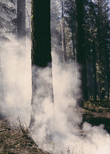 A controlled forest burn, a deliberate fire.の写真素材 [FYI02245529]
