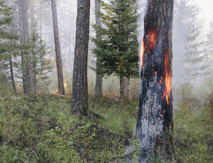A controlled forest burn, a deliberate fire.の写真素材 [FYI02245531]