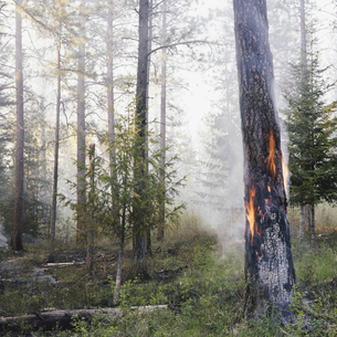 A controlled forest burn, a deliberate fire.の写真素材 [FYI02245617]