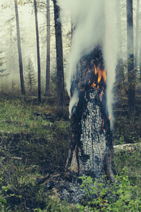 A controlled forest burn, a deliberate fire.の写真素材 [FYI02245619]