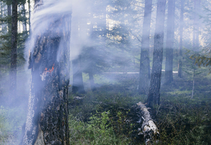 A controlled forest burn, a deliberate fire.の写真素材 [FYI02245641]