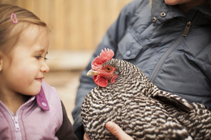A woman and a child, holding a black and white chickenの写真素材 [FYI02245701]