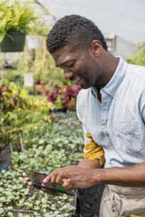 An organic farm and garden. A man using a digital tablet.の写真素材 [FYI02245747]