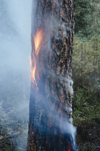 A controlled forest burn, a deliberate fire.の写真素材 [FYI02245749]