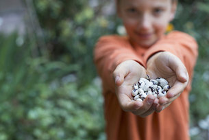 A young boy holding out a handful of dried beans.の写真素材 [FYI02245815]