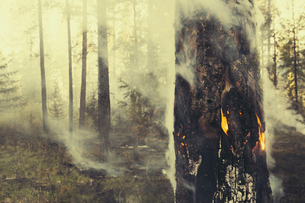 A controlled forest burn, a deliberate fire.の写真素材 [FYI02245850]