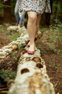 Two people walking along a fallen tree trunk in the woods.の写真素材 [FYI02245917]