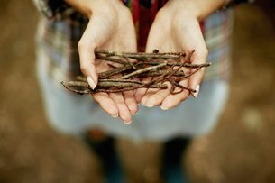 A person's hands holding kindling for the camp fire.の写真素材 [FYI02245995]