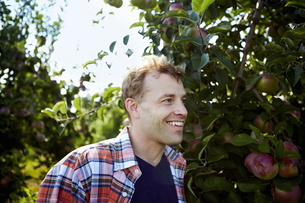 A man in a plaid shirt in an apple tree orchard.の写真素材 [FYI02246078]