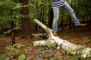 A man walking along a fallen tree trunk in the woods.の写真素材 [FYI02246125]