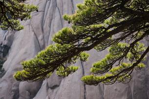 Huang Shan landscape, Chinaの写真素材 [FYI02246304]