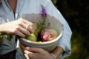 A woman holding a pottery bowl with fresh picked applesの写真素材 [FYI02246491]