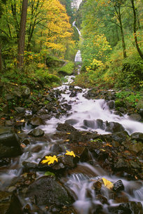 Wahkeena Falls. Water flowing down a valley in woodland.の写真素材 [FYI02246593]