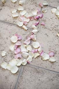 Fresh organic confetti, natural pink dried rose petalsの写真素材 [FYI02246600]