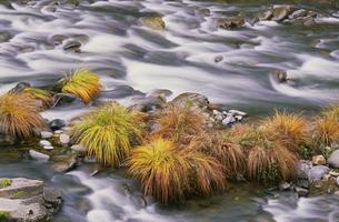 The flowing waters of Sweet Creek in Oregon.の写真素材 [FYI02246620]
