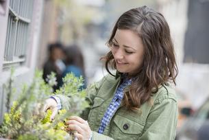 A woman tending a window box on a city street.の写真素材 [FYI02246671]